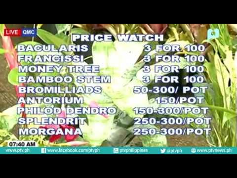 Price Watch: Quezon Memorial Circle