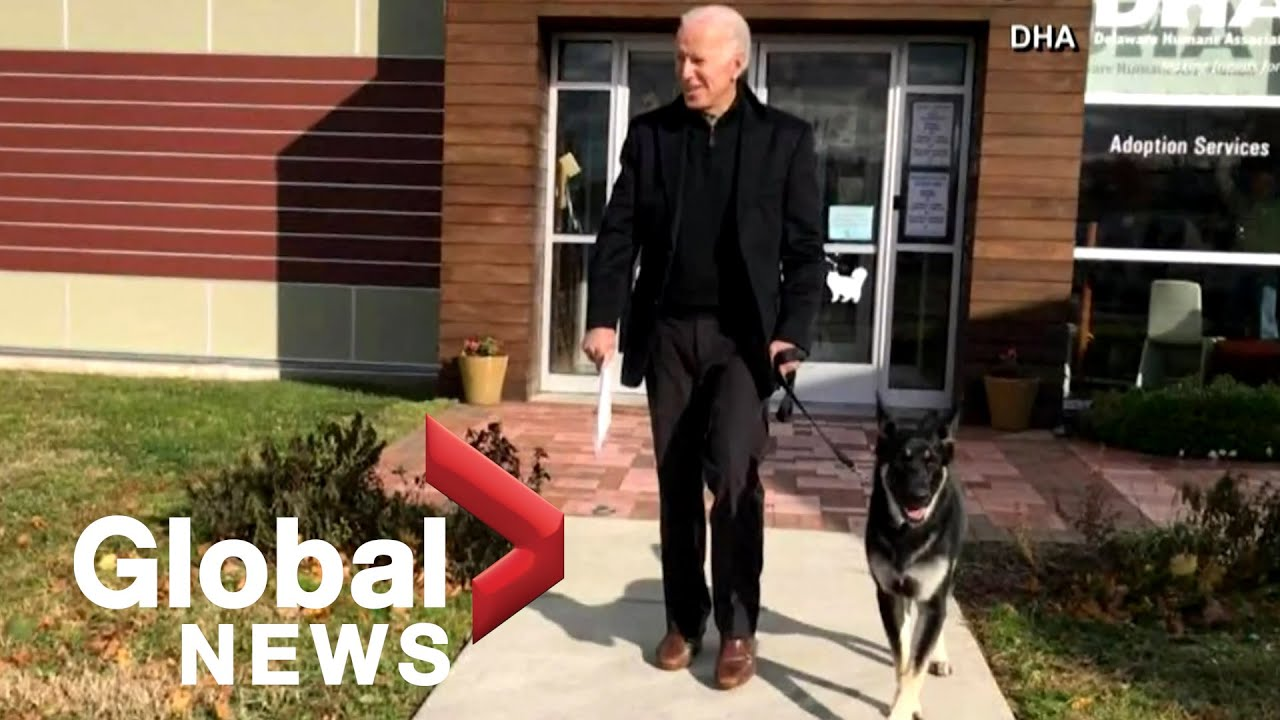 President Biden's dog Major in the doghouse after injuring security ...