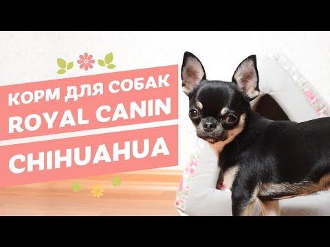 Вопрос: Как переводится порода собаки чи-хуа-хуа?