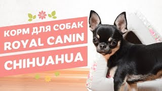 Royal Canin Chihuahua Сухой и влажный корм для собак породы чихуахуа
