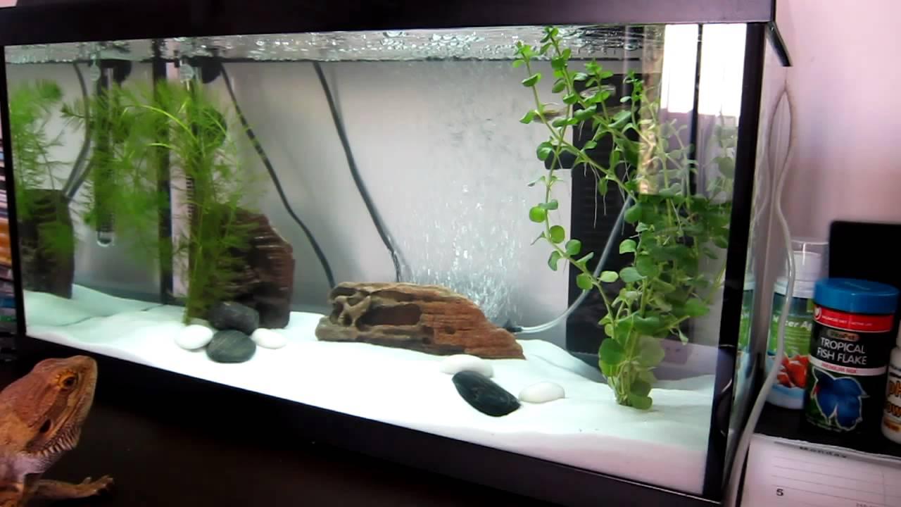 rocco meets fish juwel korall 60 aquarium youtube. Black Bedroom Furniture Sets. Home Design Ideas