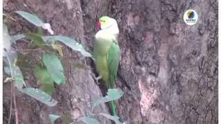 The Official Shutterbugs Are Back From Bharatpur!.mpg