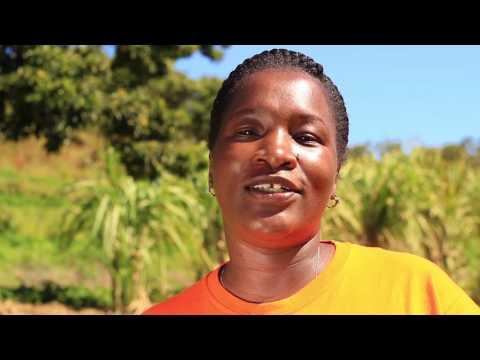 Enhancing smallholder sugar bean production in Zimbabwe VLog