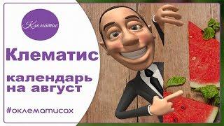 КЛЕМАТИС - календарь ухода на август -  В зоопарке Васильевки Nina Petrusha и канал Клематис  TV