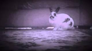 Little Bunny 💕