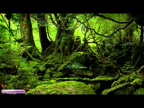 Celtic Music | Ancient Forest | Celtic Lute & Guitar Music
