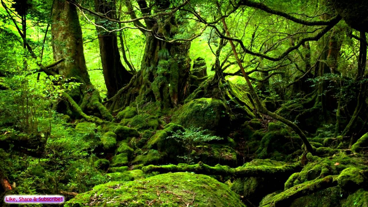 Japanese Art Wallpaper Hd Celtic Music Ancient Forest Celtic Lute Amp Guitar Music