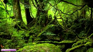 Celtic Music | Ancient Forest | Celtic Lute & Guitar Music