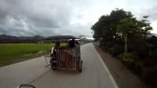 Le transport des animaux à Palawan au Philippines, un peu spécial!