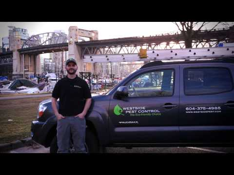 The Best Vancouver Pest Control Company   (604) 559-9060