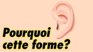 Pourquoi la forme de l'oreille est-elle si compliquée ?