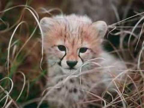 animals wild nature am...