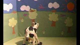 Dancing Cow by Tazeem Akhtar.avi