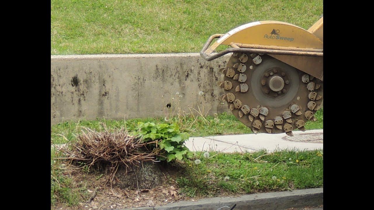 Tree Stump Removal Doovi