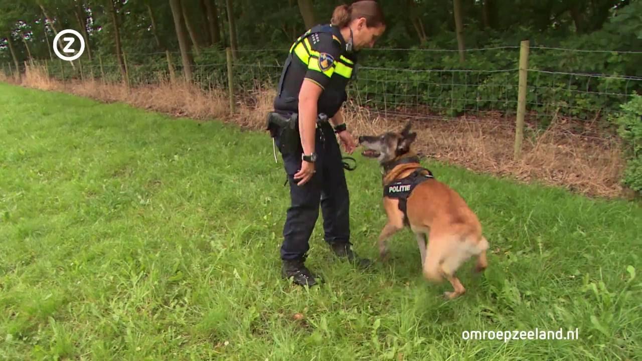Kleurplaten Politiehonden.Een Politiehond Is Een Wapen Youtube