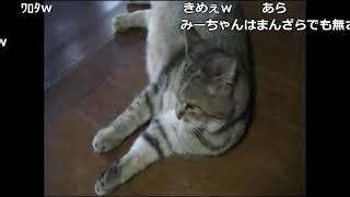 実家を紹介する加藤純一【2010/09/10】