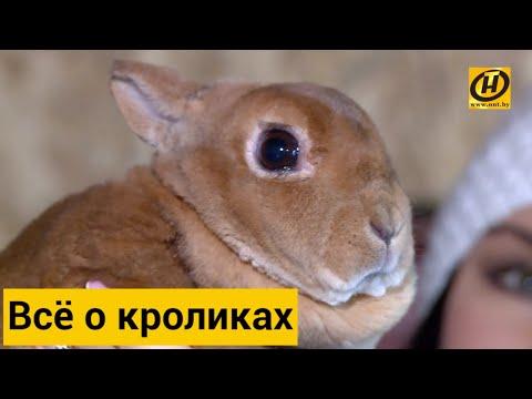 Декоративные кролики: что нужно знать, прежде чем завести