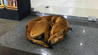 stray-dog-steals-book-from-library-which-book-he-stole-will-leave-you-heartbroken