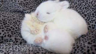 Baby Bunnies Open their Eyes for the First Time!