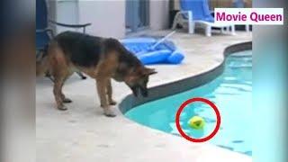 猫 犬 かわいい おもしろい 爆笑vol.3【funny cats and dogs videos】 thumbnail