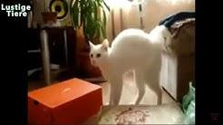 Lustige Catzen funny Cats