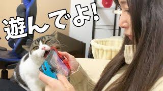 息子猫「モンハンしないで遊んでよ!」【モンハンライズ体験版】