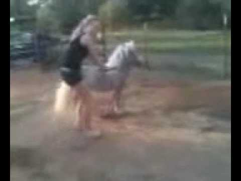 Trying to stay on a bucking miniature horse is hard work ...