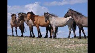 North Americas Wild Horses HorseTango
