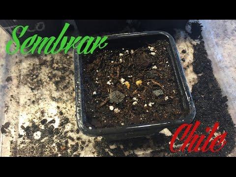 Como hacer un insecticida org nico casero contra pulg n doovi - Como matar acaros del colchon ...