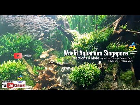MUST SEE Biggest Giant Best Aquascape Beautiful Freshwater Aquarium Tank