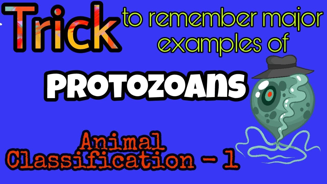 Trick To Remember Major Examples Of Protozoans I By Biotrickology