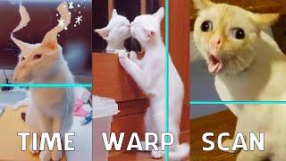 Time Warp Scan Animals #3 - TikTok Compilation