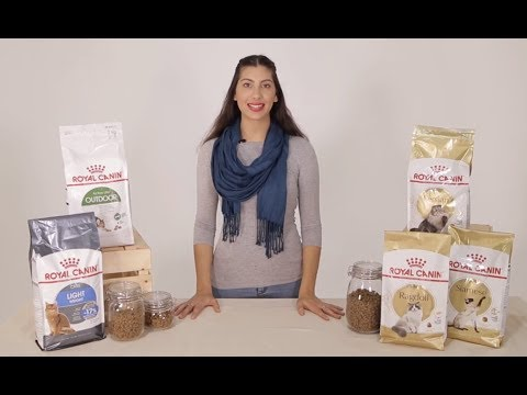 Royal Canin Cat Food - Discover More With Pet Circle