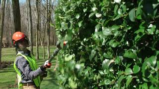 Husqvarna 520iHT4 Telescopic Battery Hedge Trimmer
