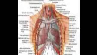 what is asbestos lungs cancer