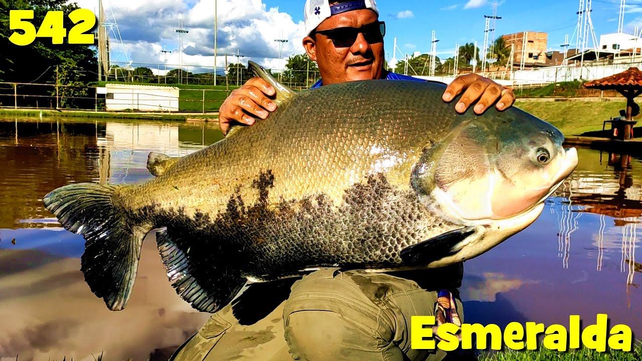 Verdão, grandes Tambacus e couros no Esmeralda - Fishingtur na TV 542