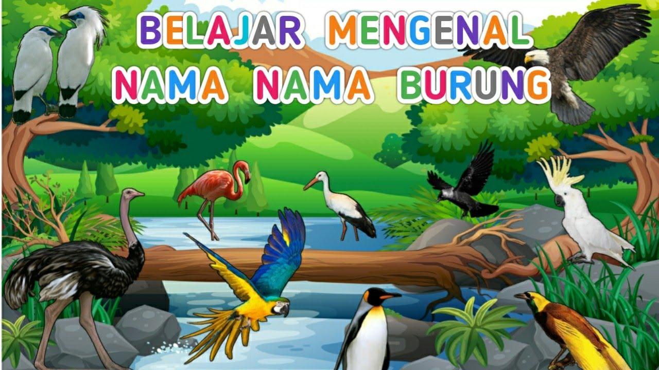 Download Belajar mengenal nama dan suara burung | Suara binatang animasi | nama nama burung