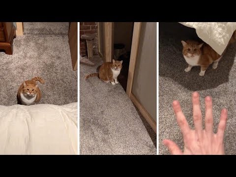 Crazy Cat Won't Let Real Estate Worker Leave Property