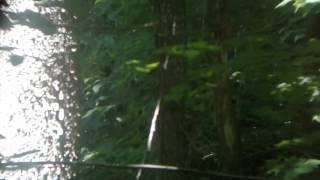 Strange red orb in my woods, no game cam light