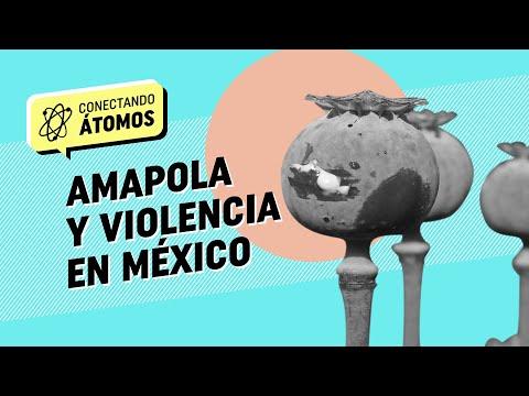 Conectando Átomos Ep.11 Todo sobre el cultivo de amapola