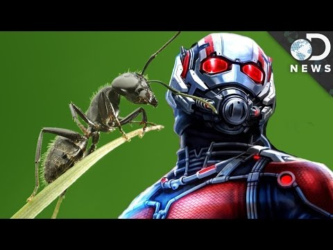 What A Bug Scientist Says About 'Ant-Man' poster