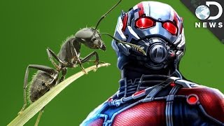 What A Bug Scientist Says About 'Ant-Man'