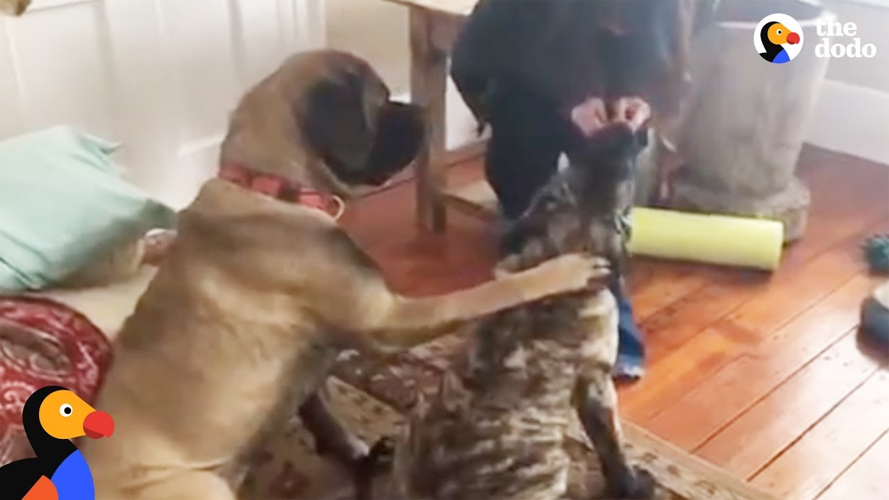 Dog Teaches Puppy Brother How to Sit For Treats | The Dodo