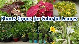 रंगबिरंगी पत्तो वाले पौधों से बगीचा होगा और भी खूबसूरत जिसे देखके परोशी होंगे हैरान   Colorful Plant