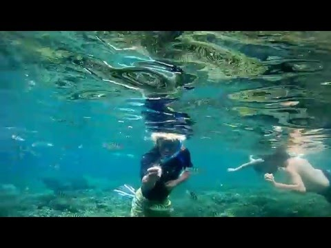 Ocean Life, Indo 2015