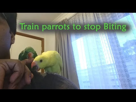 Teach your parrot not to bite you (100% works) /Indian ring-neck parrots
