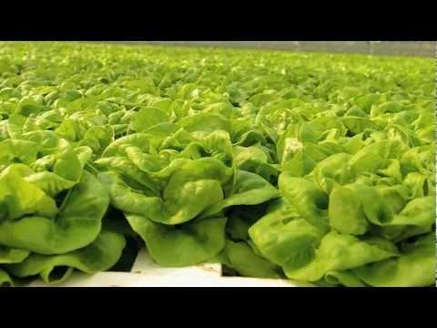 Know a California Farmer: Pete Overgaag