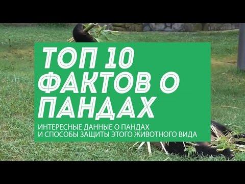 Интересные факты о России Музей фактов