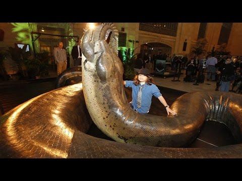 Самые большие и самые опасные змеи в мире