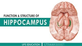 Functions and Structure of Hippocampus